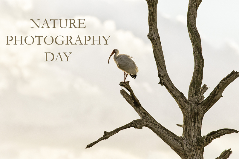 Nature Photography Day (1 of 1)